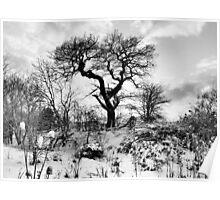 Snow, Snow, Snow Poster