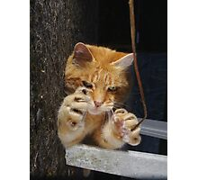 Halloween cat Photographic Print