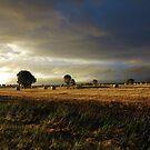 Farmlife by Digby