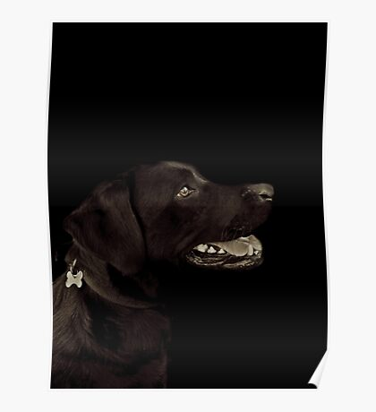 Barny, The Black Lab Poster