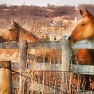 View from the Fence by Nadya Johnson