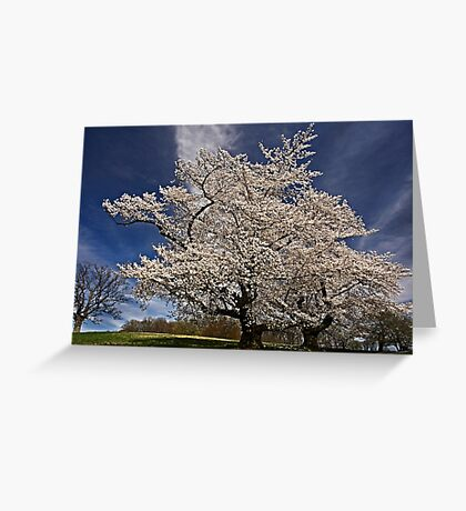 When the cherries bloom, Spring is here. Greeting Card