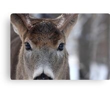 White-tailed Deer Buck up close and personal Metal Print