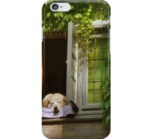 His favorite place - a dog's life at Bruges (BE) iPhone Case/Skin
