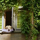 His favorite place - a dog's life at Bruges (BE) by bubblehex08