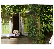 His favorite place - a dog's life at Bruges (BE) Poster