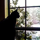 Cat in the Window by AspenWillow