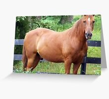 Confident Stallion Greeting Card