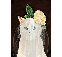 The Bride Cat Art Photographic Print