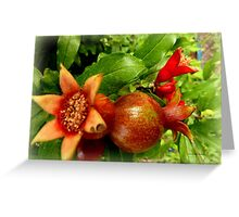 Young Pomegrantes Greeting Card