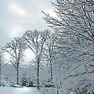 Winter Walk by Eileen McVey