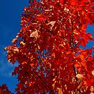 Beauty of  fall..chords of life by jammingene