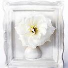 White Camellia in White Vase Frame by DPalmer
