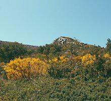 Mountain View by Jane Terekhov