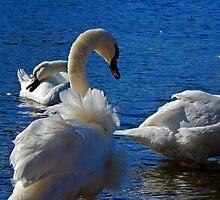 Swanning Around by mhphotographyuk