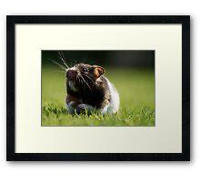 Hamster in the Grass Framed Print