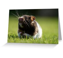 Hamster in the Grass Greeting Card