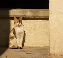 Stray Cat by Vicki Spindler (VHS Photography)