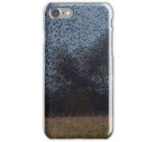 Starling Roost! iPhone Case/Skin