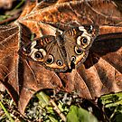 General Butterfly by Rick  Friedle