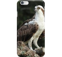 Osprey with dinner iPhone Case/Skin