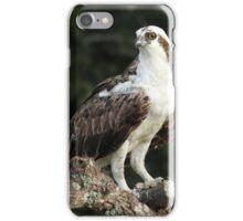Osprey with dinner iPhone Case/Skin