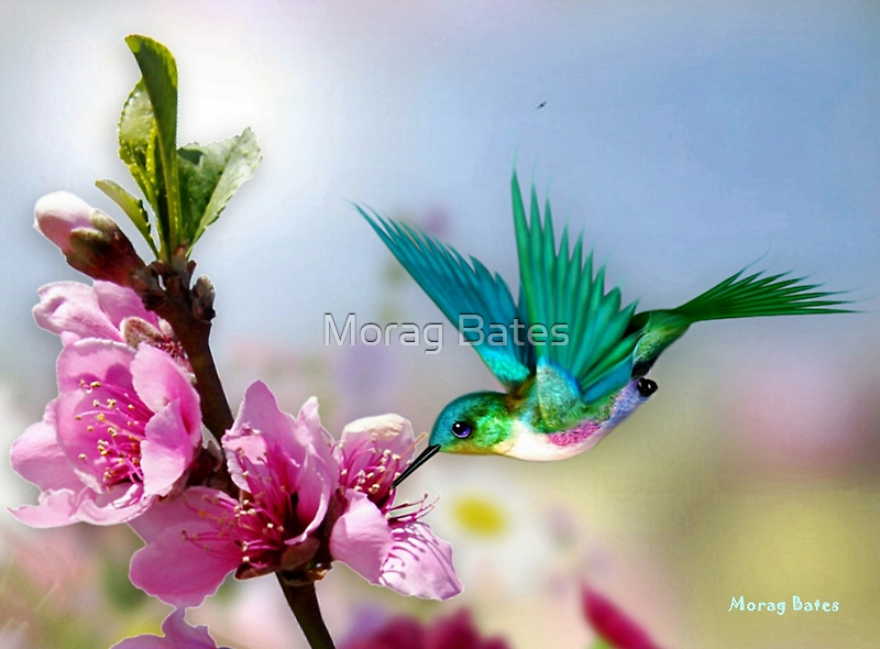 Tiny Wings by Morag Bates