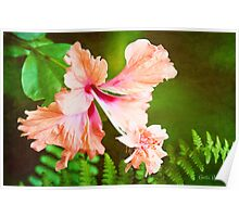 Showy Hibiscus Amid the Greenery Poster