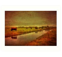 Cows On The Marsh Art Print
