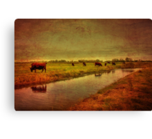 Cows On The Marsh Canvas Print