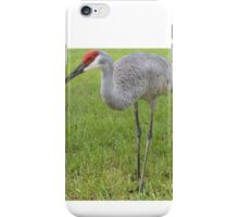 Front yard Sand Hill iPhone Case/Skin