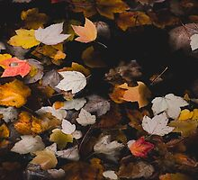Autumn Pattern by Sue Morgan