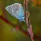 Blue butterfly by JBlaminsky