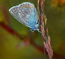 Blue butterfly by JBlaminsky