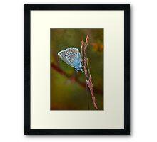 Blue butterfly Framed Print
