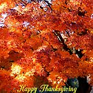 Thanksgiving #1 by WildThingPhotos