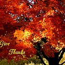 Give Thanks #1 by WildThingPhotos