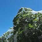 Figs under Net. by geof