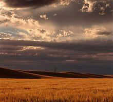 Stormy Wheat - Horsham - Victoria by James Pierce