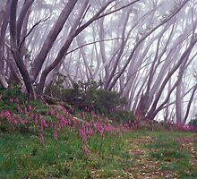 Pink + Grey - Mt Baw Baw - Victoria by James Pierce