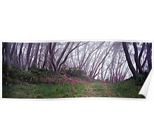 Pink + Grey - Mt Baw Baw - Victoria Poster