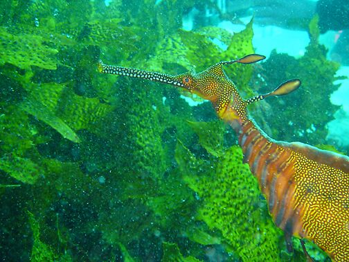 seaweed by aquafarian