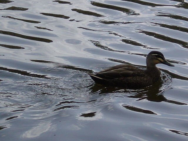 Ripples by Helen French