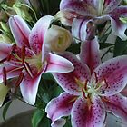pink lilies2 by Helen French