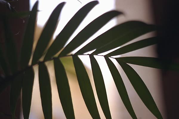 Paris palm by Paul Hosking