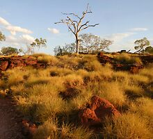 Tree & Spinifex by Mark Williamson