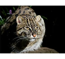 Fishing Cat Photographic Print