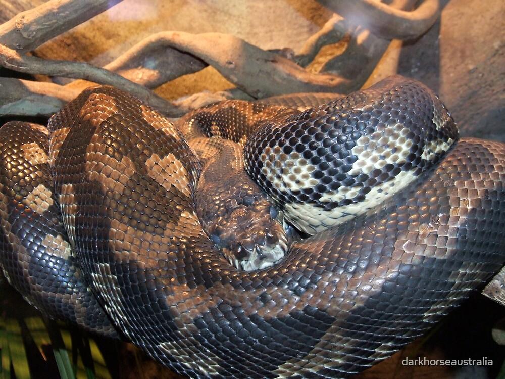 Sleeping Snake.....I think! by darkhorseaustralia