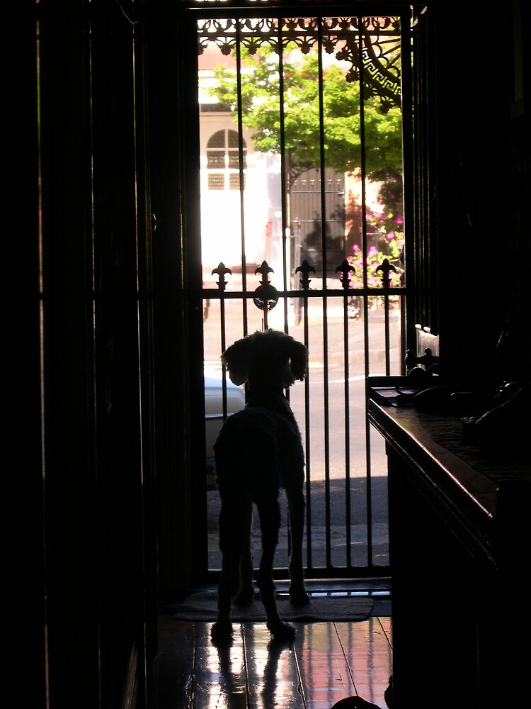 Waiting for Salley by orangebuddha