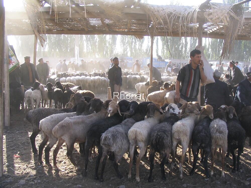 Kashgar animal market by Rhona